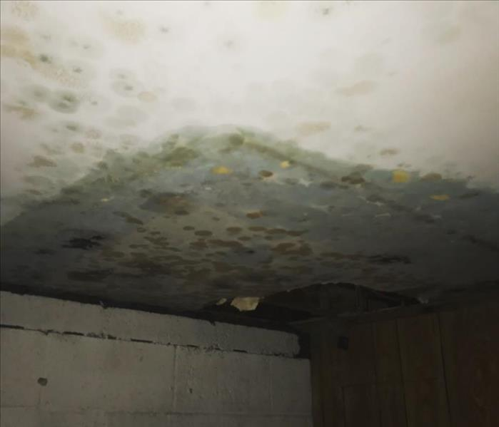 Unchecked Mold