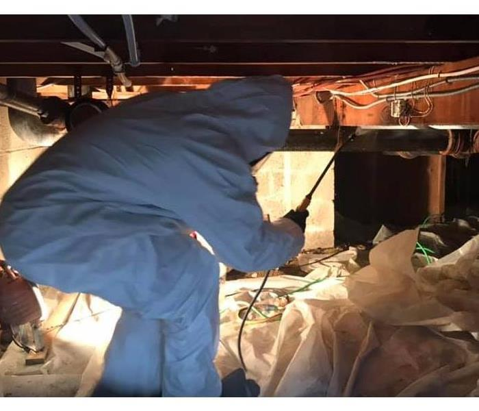 Mold Remediation Mild Winters Cause Mold